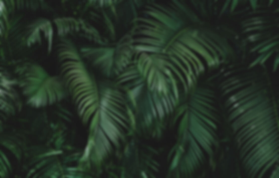 Leaves in a jungle